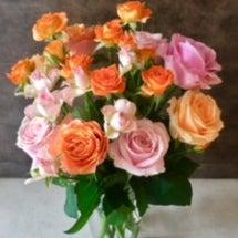 バラの花|調布市 国…