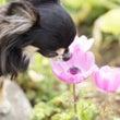 ◎花粉症対策のポイン…