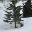 外は16度、一気に雪…