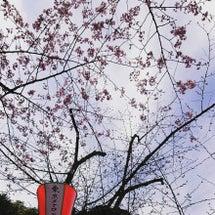 Spring has…
