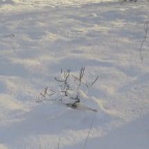雪上カメラマン危機一…