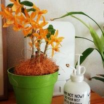 ファイヤーバード咲くの記事に添付されている画像