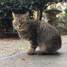 大人美猫に注目ぅ!