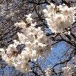 春の新月・・・あなた…