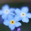 花咲く美しい「ワ」カ…