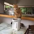猫も花粉症?
