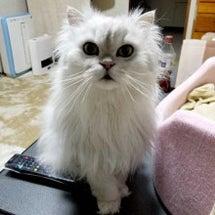 かわいそうな猫たち