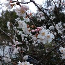 ♪春ですね~ (#^…