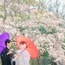 桜の和装前撮りがいよ…