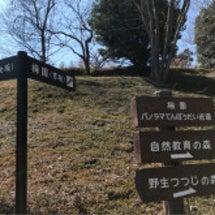 春を感じに岩本山公園…