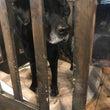 我が家の老犬