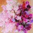 たくさんのお花に包ま…