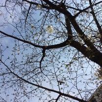 木の芽だちの対策についての記事に添付されている画像