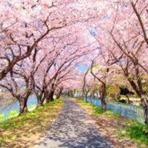 桜の花見までもう少し…
