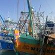 昼下がりの漁港にマグ…
