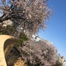 咲きほこってます