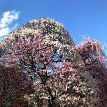 『春分の日のお話とご…