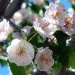 桜の咲く頃は、何かを…