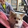保護犬シンバ:トライ…