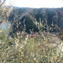 奈良の月ヶ瀬梅林に来…