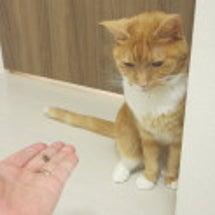 助けて下さい!猫が全…