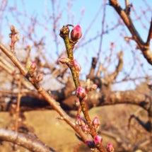 自ら春を呼ぶ