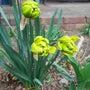 テラスの花壇 -スイ…