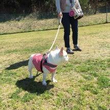 犬の学習塾