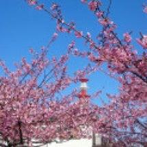 宇都宮城桜まつり