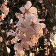 桜が咲いてた❣️