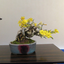 盆栽:第7回東海雅展…