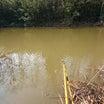 へらぶな釣り in 旧びん沼