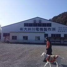 大井川鉄道を見る?旅…