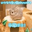 オススメ書籍【新版 …
