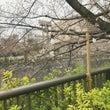☆東京、神宮前の「パ…