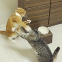 3年間姉猫に喧嘩を挑…