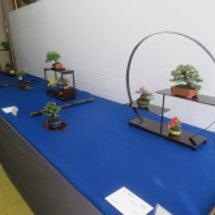 盆栽:名古屋小品盆栽…