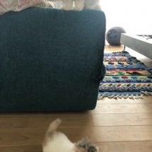 詩丸と子猫たち