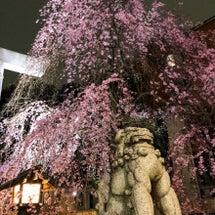 気づけば桜が、