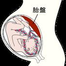 胎盤における酸素と栄養のやりとりの記事より