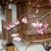 本日の桜の様子