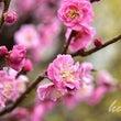 春の花便り