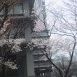 外務省の桜と梅
