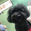 火曜日の幼稚園☆(犬…