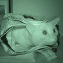【夜の猫 #6】夜中…