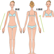 肩甲骨と美肌の関係