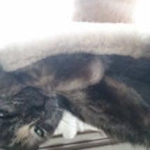 幸せになった猫♡メル…