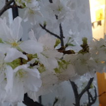 春分の日…