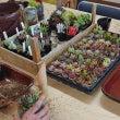多肉植物の寄せ植え教…