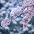 桜は散り、梅は溢れて…